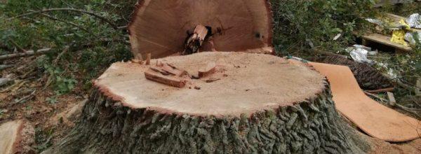 Rodungen im Dannenröder Forst – Wir brauchen die Verkehrswende.